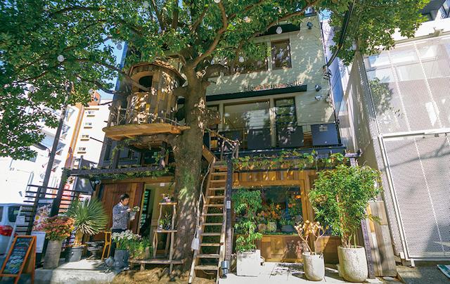 treehousecafe_fleur-universelle_1