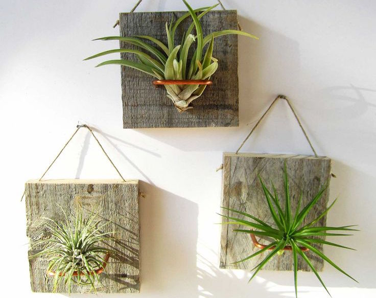 airplants_223191c82e12959f9d4ed931c0495fbb