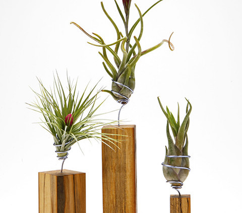 airplants_WShop_AirplantVessel_woodset