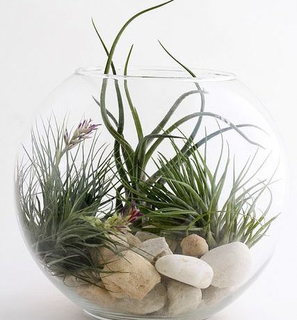 airplants_bb3576fd09e9c5f782deaa09f7ff6595