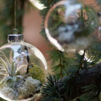 airplants_christmas-tree-ornaments-with-living-plants-3