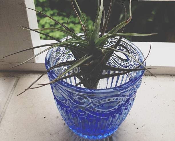 airplants_loving-air-plants-instagram