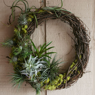 airplants_tillandsia_wreath_2_sm