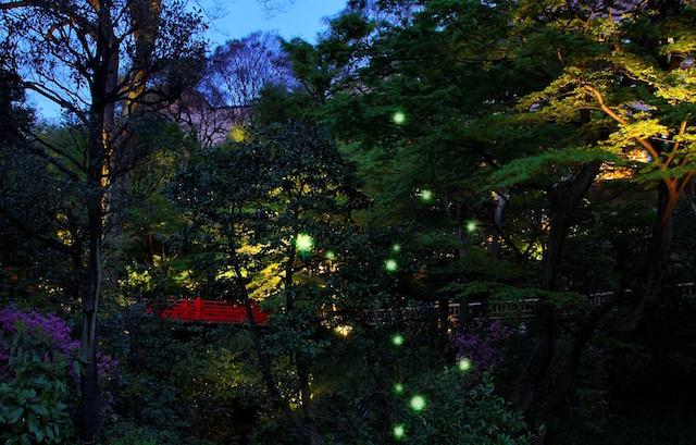 椿山荘hotaru