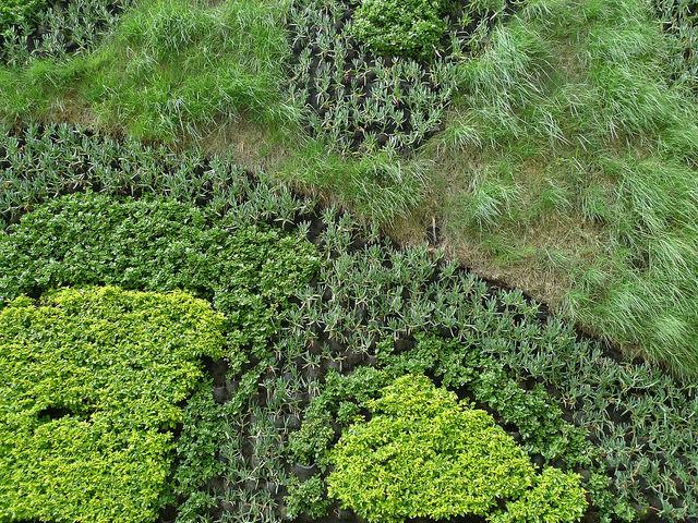壁にかける緑のアート、グリーンウォールで癒しの空間作り。